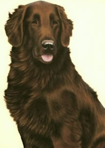 just-dogs-liver-flat-coated-retriever-6276
