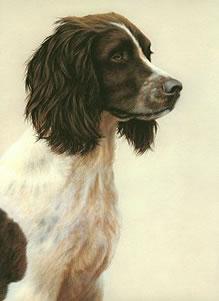 just-dogs-liver-white-english-springer-spaniel-6272