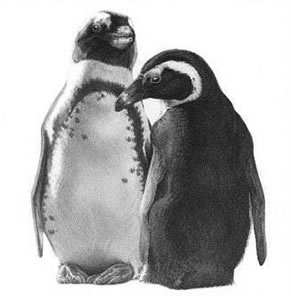 just-the-two-of-us-penguins-6301
