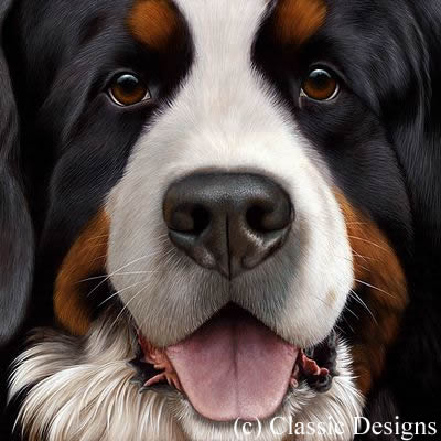 larger-than-life-bernese-14757