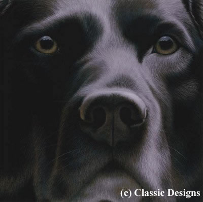 larger-than-life-black-labrador-11701