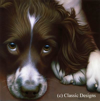 Larger Than Life - Springer Spaniel II (Bc) by Nigel Hemming