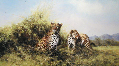 leopards-2897