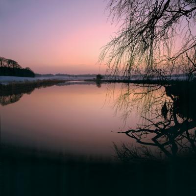 lilac-dusk-3567