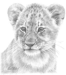 lion-study-1382