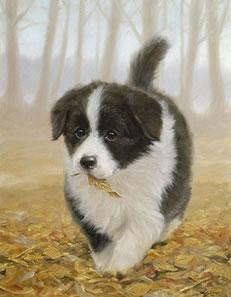 Litterbug! - Border Collie Pup
