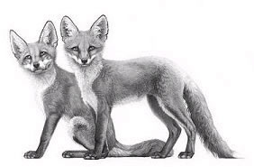 little-foxes-3656