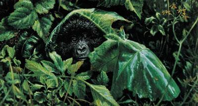 looks-like-rain-gorilla-2382