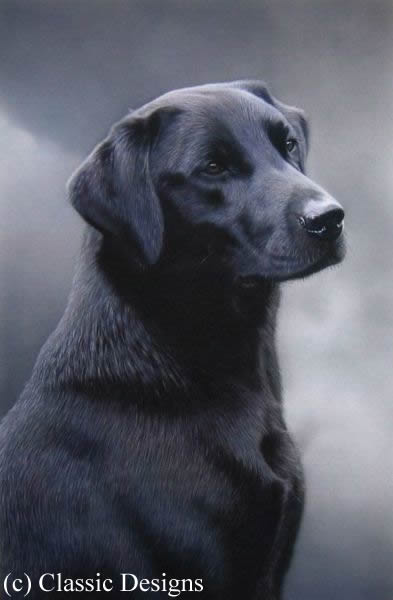 loyalty-black-labrador-6119