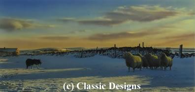 mac-at-work-border-collie-sheep-7226