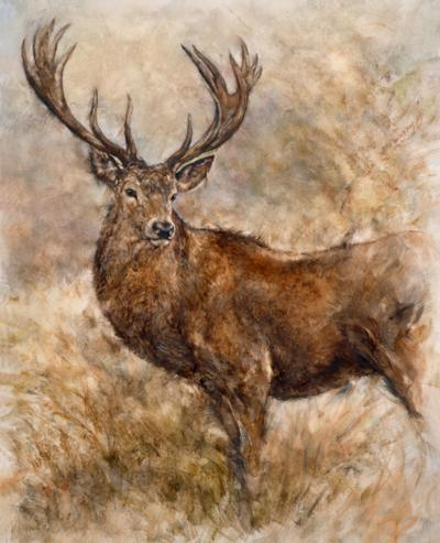 Majestic Stag by Gary Benfield
