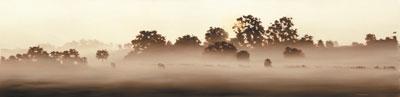 morning-mist-2077