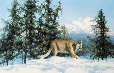 Mountain Lion (& Cameo)