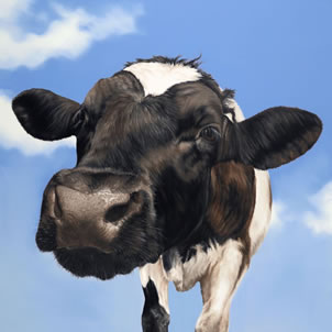 nosey-cow-7603