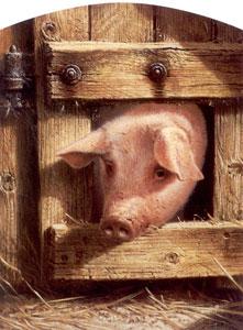 nosy-parker-pig-2390
