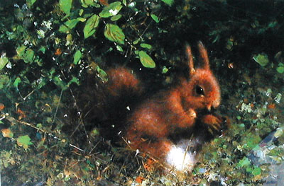 Nuts (Red Squirrel)
