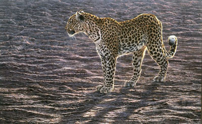 okavango-apparition-canvas-2308