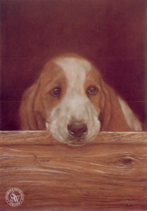 Only The Lonely (Basset Hound) by John Silver