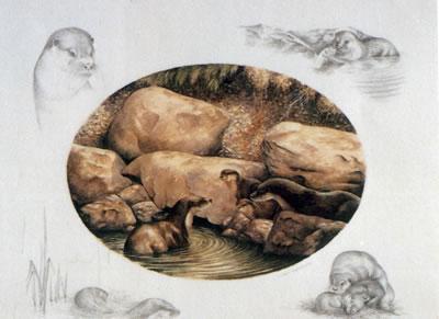 otter-family-1548