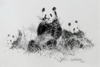 panda-pencil-2899