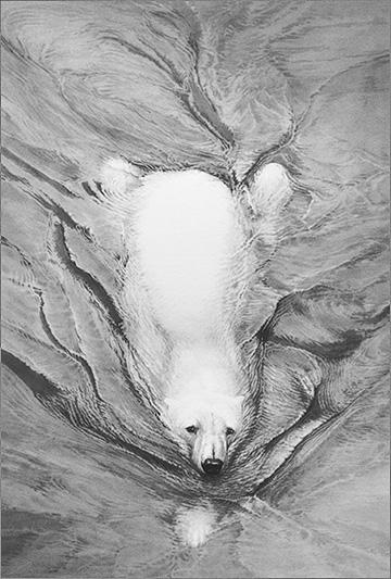 polar-bear-swimming-1962