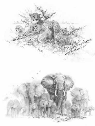 Portfolio Set I - Cheetahs & Elephants (Set of 2)