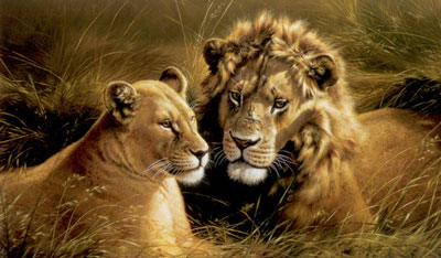 pride-of-africa-lion-lioness-2385