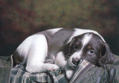 puppy-eyes-6279