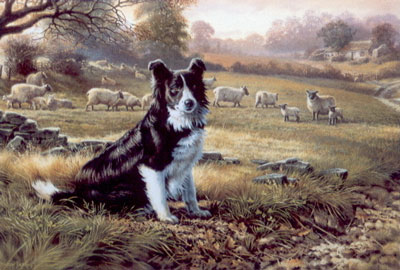 ready-for-work-border-collie-2398