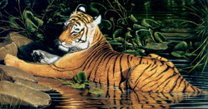 reflections-of-india-tiger-2375