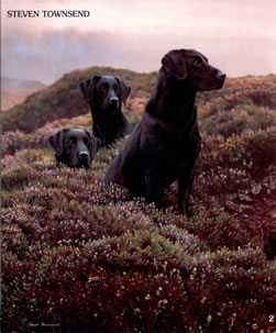 return-of-the-three-musketeers-black-labradors-1223