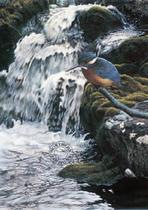 river-jewel-kingfisher-1239