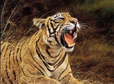 roar-of-the-jungle-tiger-2285