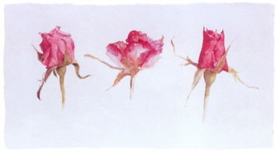 rose-bud-trio-2579