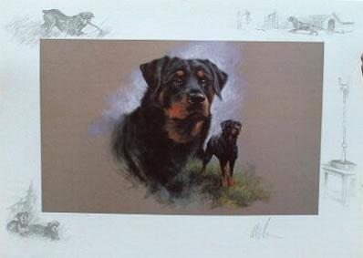 rottweiler-3921