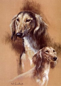 Saluki by Mick Cawston