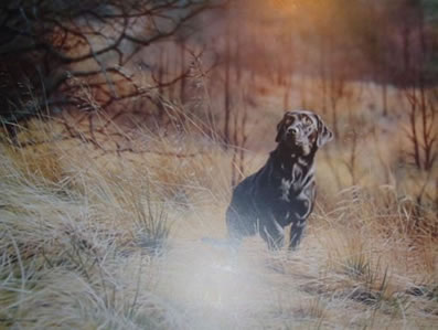 sam-black-labrador-3738