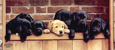 Seven Up - Labrador Puppies by Nigel Hemming