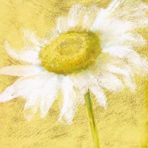 slice-of-life-daisy-3308