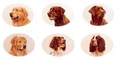 small-head-studies-on-1-sheet-or-6-individual-1508