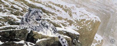 snow-leopard-2524