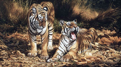 son-heir-on-canvas-tigers-2372