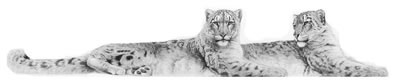 soulmates-snow-leopards-6759