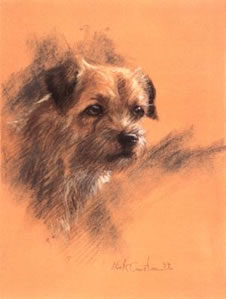 study-of-a-border-terrier-3946