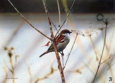 study-of-a-sparrow-1241