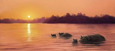 sun-worship-hippos-5072
