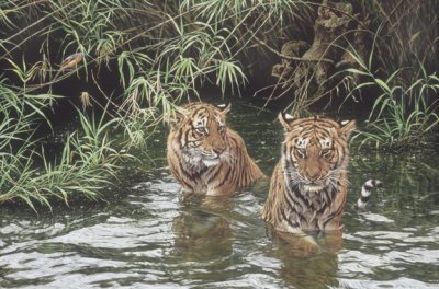 swimming-lesson-tigers-2281
