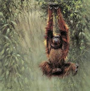 swinging-borneo-orangutan-2110