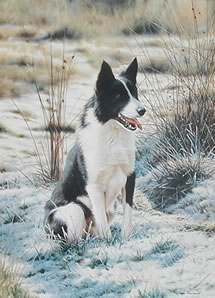 take-five-border-collie-1227