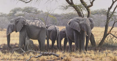 taking-shade-elephants-7097